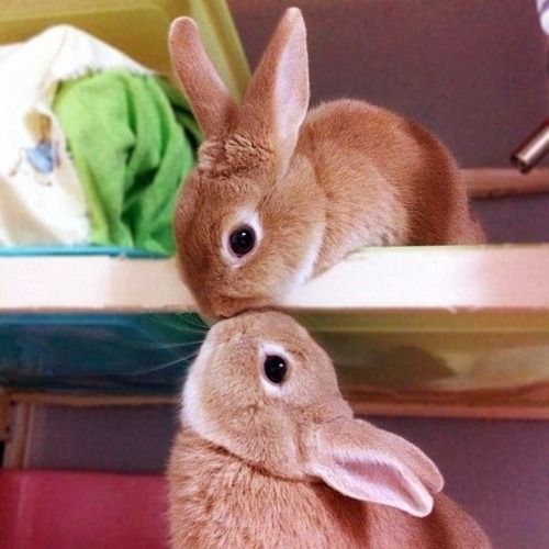 digitalash:  i think i posted this before.. but… bunny kisses…