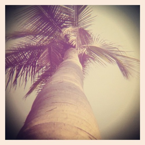 Guten Morgen :) #pondicherry #palm #coconut #india #perspective #60d #holga #tree (Taken with Instagram at Pondicherry)