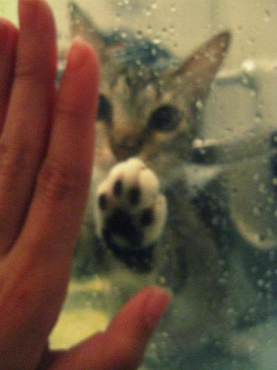 my baby :3 , she used to do this when i was taking a shower, now she is afraid of going in the bathroom when i am taking a shower because i throw water at her ehehehe