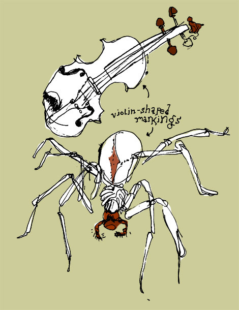"jtotheizzoe:  Spider silk spun into violin strings It's a technology fit for It-silk Perlman. Japanese scientists have succeeded in harvesting spider silk for violin strings. Could they be an improvement on the gut and nylon used today?  Dr Osaki used 300 female Nephila maculata spiders - one of the species of ""golden orb-weavers"" renowned for their complex webs - to provide the dragline silk. For each string, Dr Osaki twisted between 3,000 and 5,000 individual strands of silk in one direction to form a bundle. The strings were then prepared from three of these bundles twisted together in the opposite direction.  Manyplayers reported that the spider strings had improved tone and a warmer feel. No word on how they plan to get the flies out of their violins. Visit the link above to hear a sample of the new strings! (ᔥ BBC News, image via Inkfinger)"