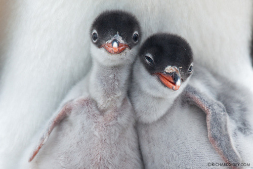 Makes me think of my sister and I… if we were penguins. Oh, wait…