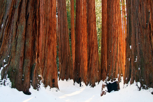 House of Sequoias