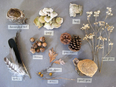 nature specimens collection by Golly Bard on Flickr.