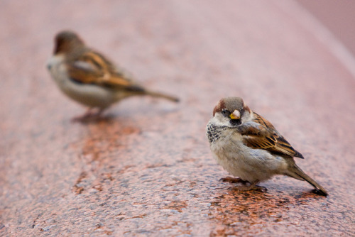 Finches Chilling on Havis Amanda on Flickr.