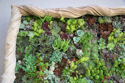 Vertical Gardens filled with Succulents. How wonderful! Make these pretty works of art by clicking through (: