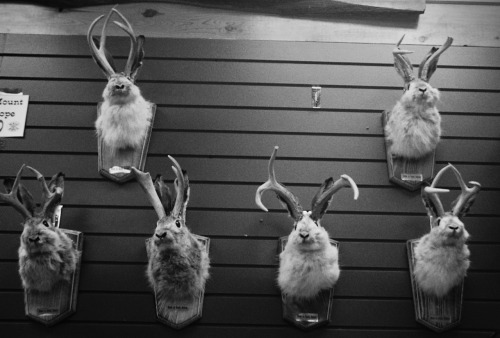 Taxidermy Tuesday! Found a  bunch of leftover shots of stuffed animals from my Route 66 roadtrip with Kay. I figure I have enough to keep this tradition alive for a month or two.