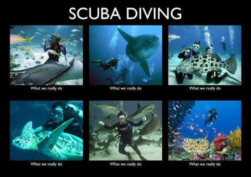 Scuba divers - what we really do! Meme was sent to us by a friend, not sure who to credit!