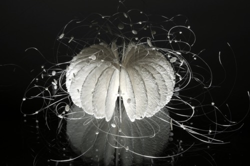Annie Woodford: Veiled Core, 2010, Porcelain, nylon monofilament, 30x30x25 cm.