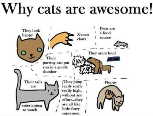 if your a cat lover you will like this