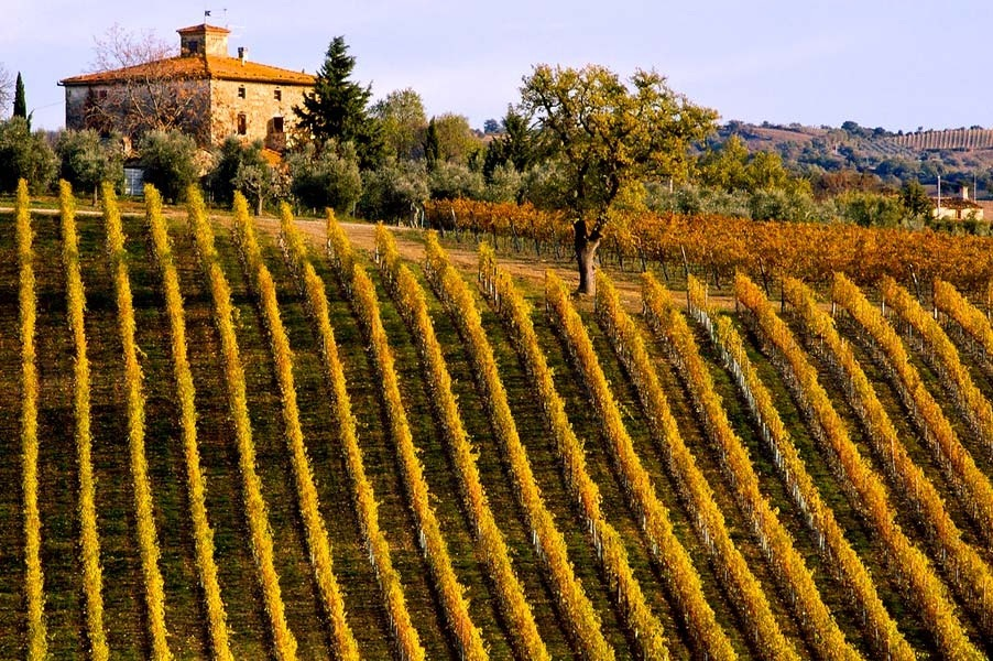 | ♕ |  Tuscan Vineyards  | by misadventures w/andi