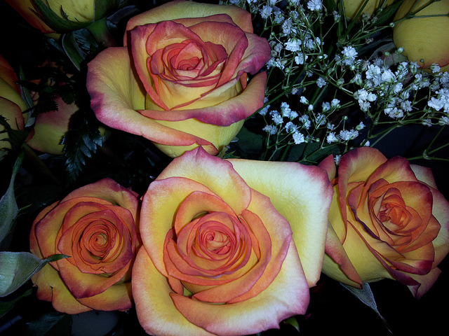 Birthday Roses on Flickr.