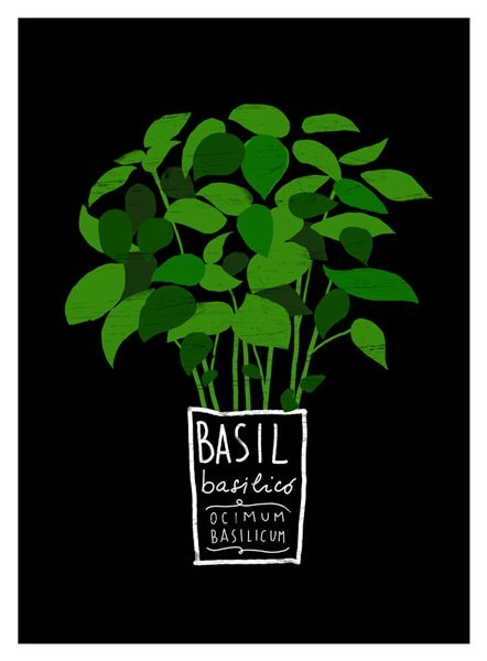 squaremeal:  Basil kitchen art print by Anek on etsy