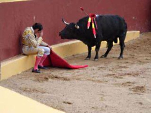 "padbury:   ""And suddenly, I looked at the bull. He had this innocence that all animals have in their eyes, and he looked at me with this pleading. It was like a cry for justice, deep down inside of me. I describe it as being like a prayer - because if one confesses, it is hoped, that one is forgiven. I felt like the worst shit on earth.""This photo shows the collapse of Torrero Alvaro Munera, as he realized in the middle of the his last fight… the injustice to the animal. From that day forward he became an opponent of bullfights.  Update: I'm not the original author of this. I saw it reposted on Facebook and posted it over here (which is why the entirety of it is in quotes). It turns out this story isn't entirely true. According to Wikipedia he became paraplegic after a bull threw him into the air, and he broke his vertebrae upon landing. Even though it doesn't seem to be a picture of Munera, the image is quite striking. Wikipedia - Alvaro Múnera (Google Translate)"