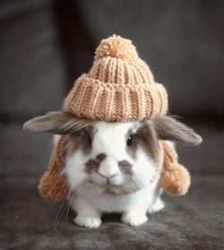 I had a bunny that looked exactly like this little one <3 :)