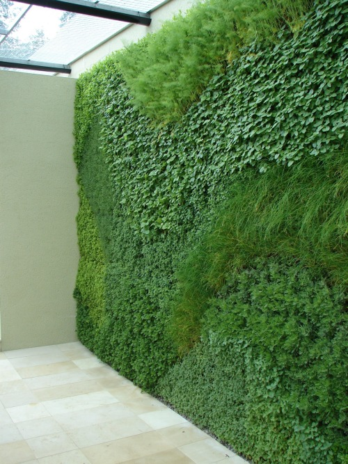 Holiday Inn Green Room at The RHS Hampton Court Flower Show 2008 A green wall planted with easy to grow herbs.
