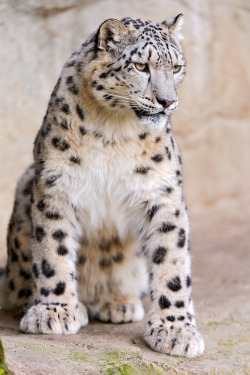 Kailash looking shy by Tambako the Jaguar on Flickr.