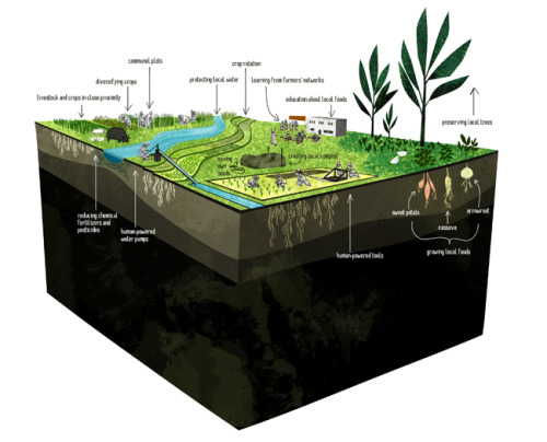 Illustration for Development and Peace.  Sustainable small-scale farming in the global South.
