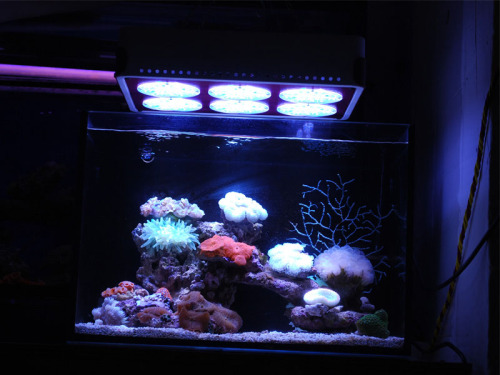 The Apollo 6 LED aquarium light: Built with excellent 3W LEDs, high efficiency. Uses UL standard isolated power suppliers, safe output voltage, less than DC 45V. Special housing design, no inner greenhouse effect while running. Aluminum fin heat sink, powerful thermal system, lower temperature. Effective optical lens, advanced penetration, high PAR reading. No glue, modular design, very easy to maintain. Intelligent monitor system will help users to supervise the whole equipment working in a good condition. Actual power compared to the other LED aquarium lights. CE and ROHS approval .Three Year Warranty. 24pcs 460nm,48pcs 12000-18000K. Lifespan: 50,000hrs. Lumens:112,300 lux. PAR value:1760 m-2s-1. Size: 383x283x85mm. Net weight: 6.25Kg. Working frequency:50/60HZ;  Working environment:45%-60%RH, -20/+40°C. Built with two switches, two power cords, the Blue and the White light sources can be separately controlled and connected with outside dimmer. Built with 72pcs 3W LEDs, input voltage 3.8,input current 700 mA. Actual power 192W.Based on White 14000K:460nm=2:1. PAR reading and lumens:2 inch:113,300 lux. PAR value:1760 mmol.12 inch:112,300 lux,1280mmol;coverage:0.8 ㎡.20 inch:78,000 lux, 728mmoll;coverage:1.12 ㎡.30 inch :46,000 lux, 265mmol; coverage:1.28 ㎡.40 inch: 18,900 lux,206mmol; coverage: 1.76 ㎡.60 inch: 14,400 lux,138mmol; coverage: 2.269 ㎡.