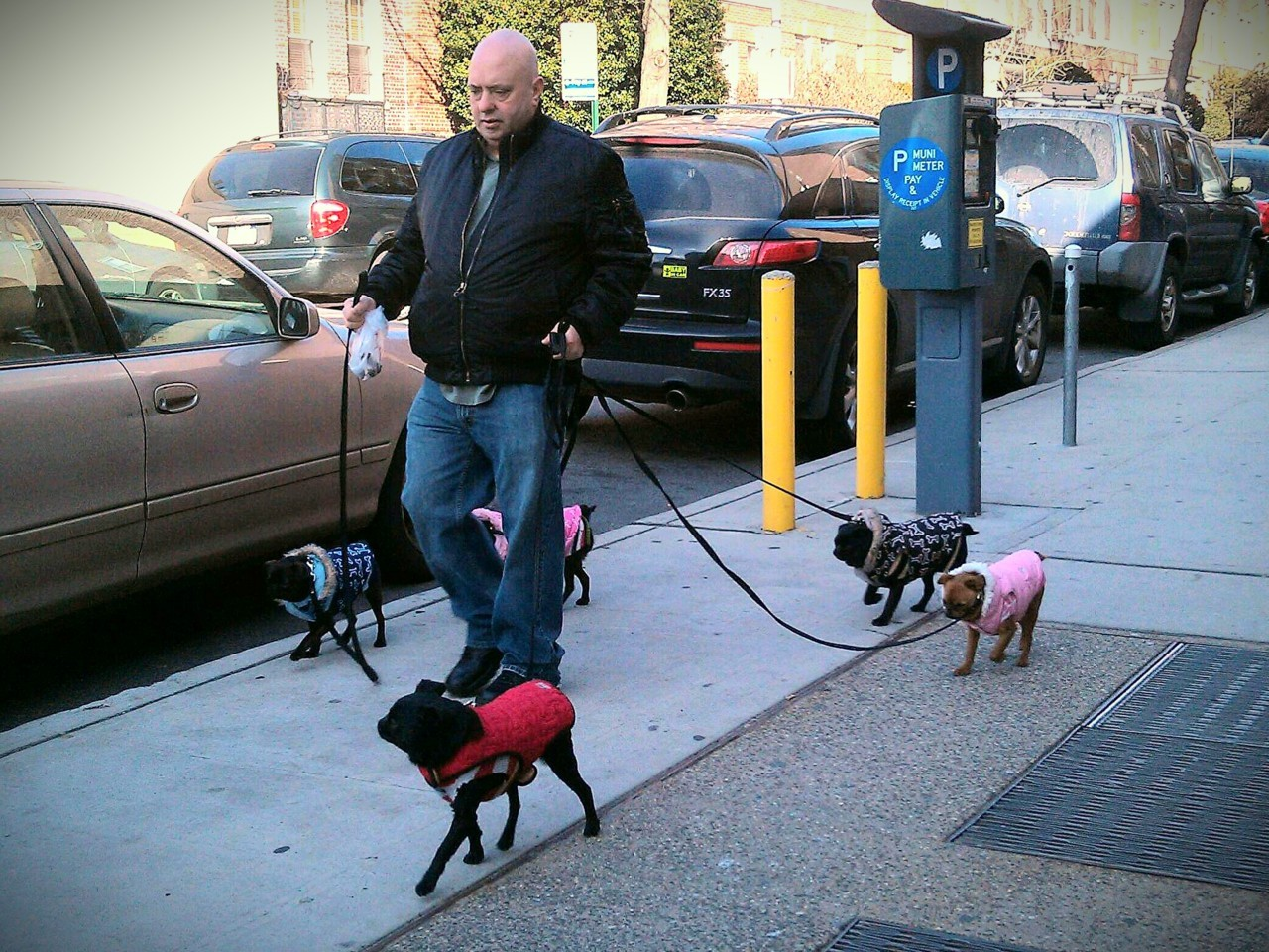 A man's best friends, 77th Street. The five pugs are not all litter mates: two are the parents to three of the pups, according to their human companion.