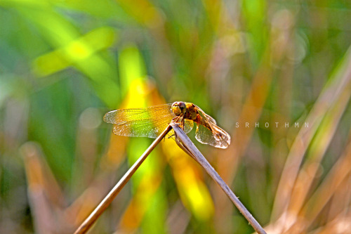 "So today I joined 500px (via 500px / Photo ""The Dragonfly"" by Sarah Othman)"