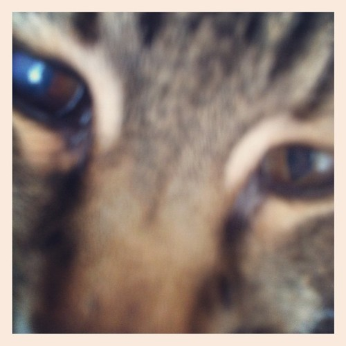 O HAI MAMMA! 😳 🐱 #whoa #extremecloseup #inyourface #cat #cats #catstagram #aww #baby #cute #dying #funny #furbaby #gatto #gatti #gato #kitty #love #meow #petstagram #tabby #tabbycat #猫  (Taken with instagram)