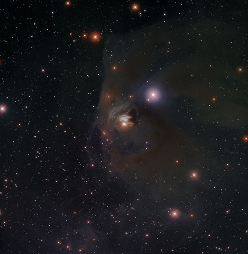 T Tauri and NGC 1555 T Tauri is a famous variable star in the constellation of Taurus. In this image, it is the star at the center of the image, embedded in dust and gas. The nebula itself is known as NGC 1555. T Tauri is the prototype for a class of stars (known collectively as 'T Tau stars') that are notable because they are very young stars in the process of forming. These stars have just recently emerged from the dense dust and gas cocoons from which they formed.