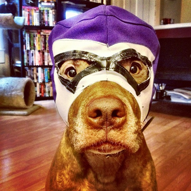 #stuffonscoutshead - Lucha Scout (Taken with instagram)