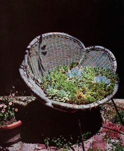 alextyson:  The World of Cactus & Succulents (1977)