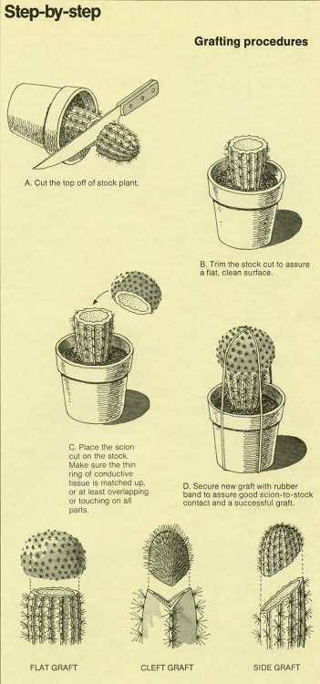 ratak-monodosico:  The World of Cactus & Succulents (1977) B-D   Super cool.