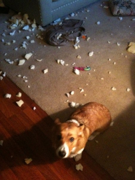 corgiaddict:  Uhm…. I don't know what happened.