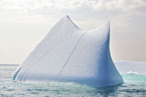 Icebergs in September from the Peterman Ice Shelf that broke off Greenland