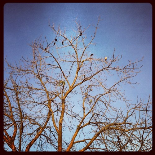 Birds not of a feather (Taken with instagram)