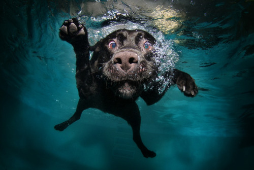 Underwater dogs by Seth Casteel.