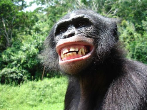 look at him! - it was you chimp! dont lie to me