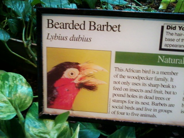 A friend is at the zoo today and sent me this photo of my new favorite bird.