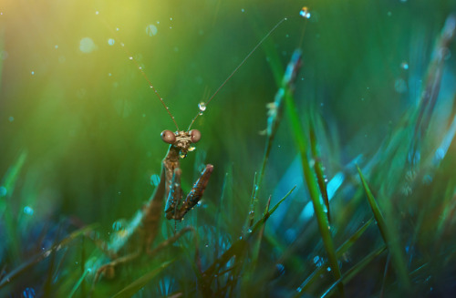 "Surreal Macro Photographs of Insects by Lee Peiling a.k.a.Twomeows ""Malaysian photographer Lee Peiling lives and works in Tanzania where she picked up a camera for the first time just three years ago. Among her quickly growing body of work are these macro photographs of insects that look almost like paintings due to her use of a focus technique known as bokeh. If you like these, definitely check out more of her Small World series."" (via Colossal)"