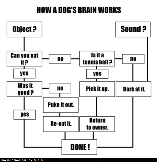 thedailywhat:  Flowchart of the Day: Oh, dogs. Don't ever change. [ihah.]