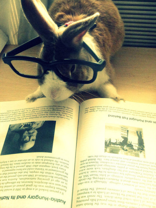 bunnyfood:  (via)