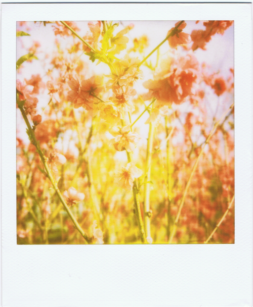 polaroidgang:  Bright pink.