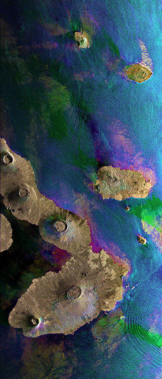 inthenoosphere:  Galapagos Islands This Envisat image features the Galapagos Islands, an archipelago situated some 1,000 km to the west of Ecuador in the Pacific Ocean. Galapagos's largest island is Isabela (visible). The five volcanoes seen on the island are (from north to south): Wolf Volcano, Darwin Volcano, Alcedo Volcano, Sierra Negra Volcano and Cerro Azul Volcano. The bigger island to the right of Isabela is Santiago Island. The image was obtained by combining three Advanced Synthetic Aperture Radar (ASAR) acquisitions (March 23, 2006, Aug. 14, 2008 and Jan. 1, 2009) taken over the same area. The colors in the image result from variations in the surface that occurred between acquisitions. Apart from mapping changes on the land surface, radar data can also be used to determine sea surface parameters like wind speed, wind direction and wave height. Different wave types and wind speeds are visible in the image as ripples on the water surface.(via Wired.com)