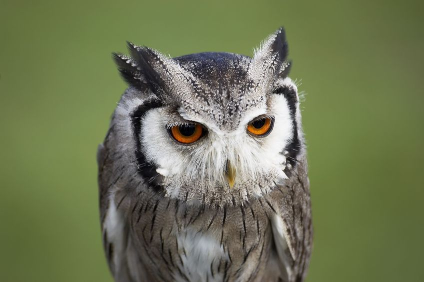 "hungoverowls:  ""I dreamt I was lying in bed, hungover. Then I woke up and I was lying in bed, hungover. I've had better mornings."""