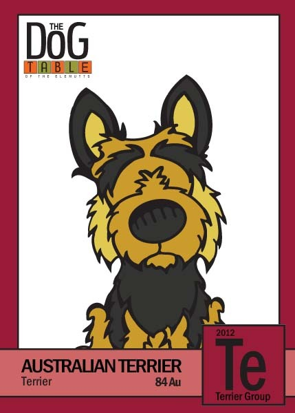 84 Au - Australian Terrier from the Terrier Group