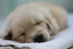 thefluffingtonpost:  PHOTO OP: Goodnight, Puppy Via wdroops.