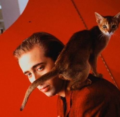 I am Nicholas Cage - I mean, Nick Cage - and I will make you my hat, cat. (But I won't pretend to even look excited about it.)