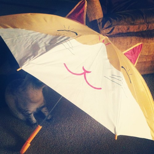 Thanks for the adorable gift Steve! #umbrella #catumbrella #cute #birthdaygift (Taken with instagram)