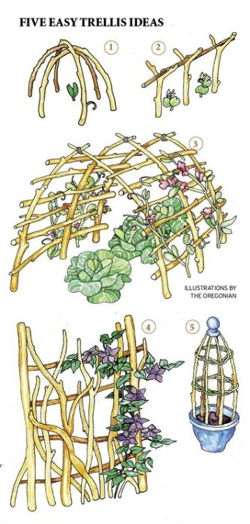 5 easy trellis ideas