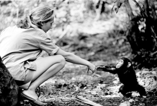 Interview With The Legendary Jane Goodall On Chimps, Feminism & Saving The Planet