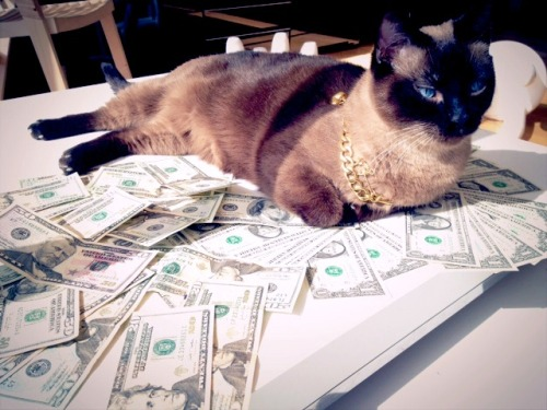 You should let your cat roll around and lie on your money, for good luck. LOL.