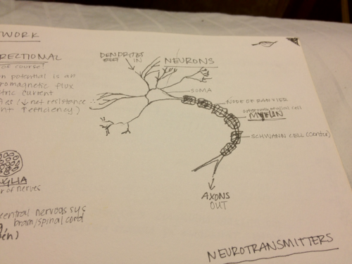 Neuron sketch. ~2010 Submit a photo of your notes.