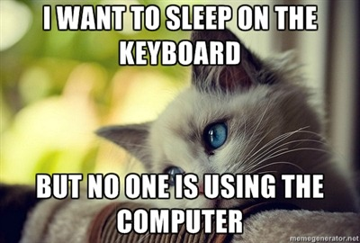 fuckyeahidonteven:  first world problems cat